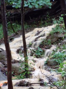 Down slope water flow , off large existing soil stockpile, western edge of woods