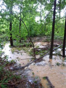 swest corner of BHS woods, block 64, lot 1; ponding, waterflow