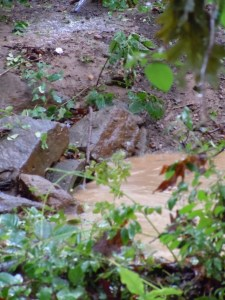 center of photo:  exposed end of concrete pipe to tributary to Penn's Brook
