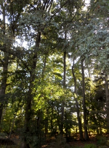 Summer tree canopy: BHS pocket woodlands