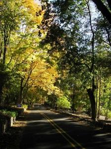 NJ trees2