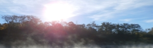 morning mist1
