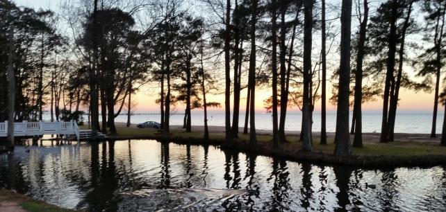 Trees at water