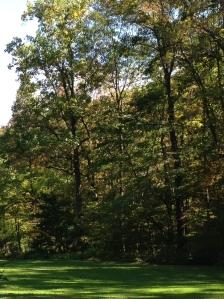 pocket woodlands